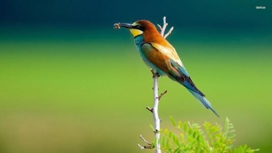 鸟的外部身体介绍